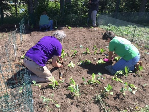 The Wyoming Coalition for the Homeless has taken up the Cheyenne Botanic Gardens' challenge to help feed hungry families. (Wyoming Coalition for the Homeless)