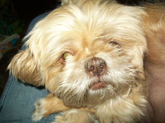 Researchers are looking for ways to extend the lives of dogs. (Virginia Carter)