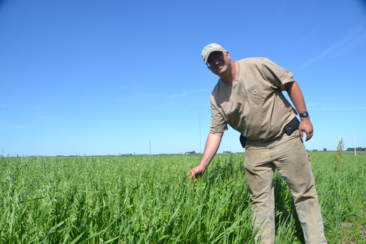 Farmer Aaron Lehman relies on oats and other small grains to cut down on pesticides, chemical fertilizers and reduce weeds. (PracticalFarmers.org)