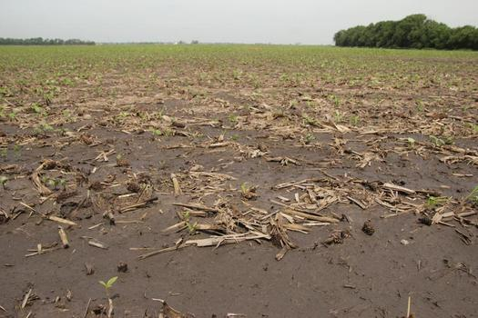 During the Dust Bowl years Missouri had the highest rate of soil erosion in the nation. (Missouri.gov)