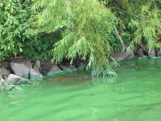Harmful blue-green algae is increasing in bodies of water across the country because of climate change, farming practices and storm and wastewater runoff. (USGS)