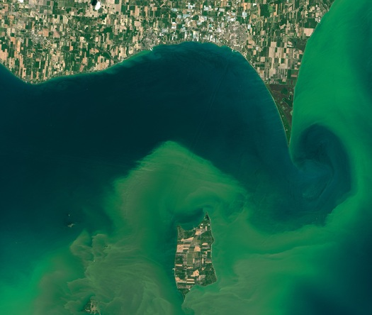 Harmful blue-green algae is increasing in bodies of water. In Massachusetts, it has affected this year's shellfish harvest. (NASA)