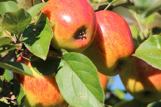 Vermont's new GMO labeling law has implications for all states. (Tascalo/Morguefile)