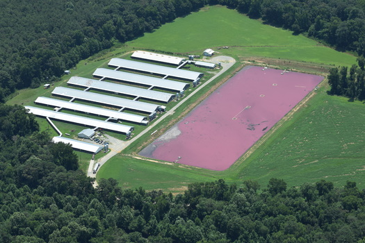 Storage ponds such as this one in the Lower Neuse basin contain agricultural waste, and environmental groups are concerned about the amount of waste seeping into area waterways and groundwater. (Graves)