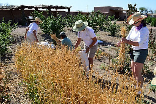 As part of Latino Conservation Week, community members are encouraged to join a hike, kayak a river or visit archaeology centers such as the Mission Garden in Tucson. (Arizona Archaeological and Historical Society)