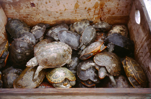 Stormwater pollution in the Chesapeake Bay is harmful to wildlife. (USGS)