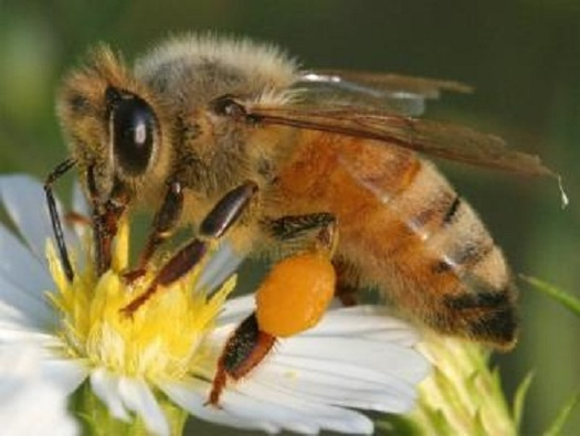 A new report says more retailers are selling bee-friendly plants, raised without using insecticides. (Bee Aware)