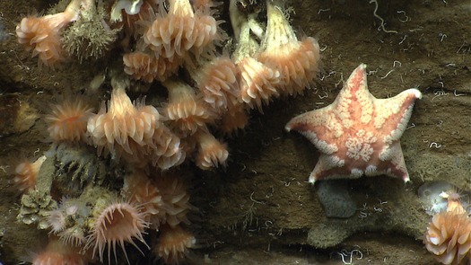 The Northeast Marine National Monument is a hotspot of biological diversity. (NOAA)
