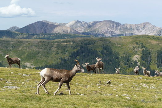 A new poll shows a majority of people in Taos County support additional protections for roadless areas near the Pecos Wilderness.(Joelle Marier)