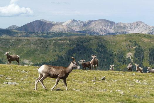 Un nuevo sondeo muestra que la mayor�a de la gente del Condado de Taos apoya protecciones adicionales para las �reas sin caminos cerca de �Pecos Wilderness� (el �rea silvestre de Pecos).