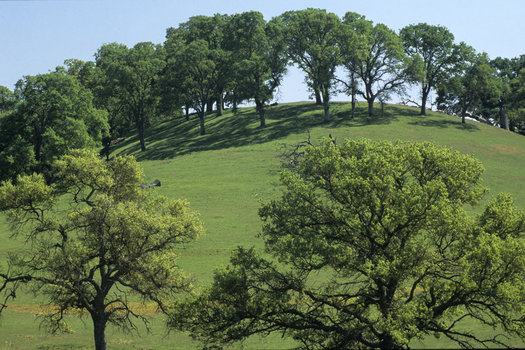 A new California law makes it state policy to promote greenhouse gas reduction in open space and agricultural lands. (Harold E. Malde/The Nature Conservancy)