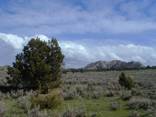 County memberships in a group working to transfer public lands � such as the Burnt Hollow Management Area � to states are on the decline. (Bureau of Land Management)