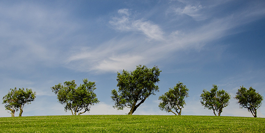 A new report says if cities across the globe would plant more trees, people would be healthier. (pixabay)