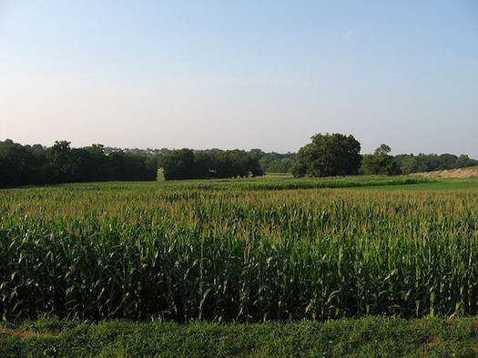 Between 2008 and 2012, 162,000 acres in New York were converted to agricultural production. (Ken Lund/Flickr)