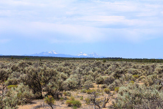 A new report says 66,000 acres of uncultivated Oregon prairie land was converted to grow crops used in biofuels. (Bureau of Land Management/Flickr)
