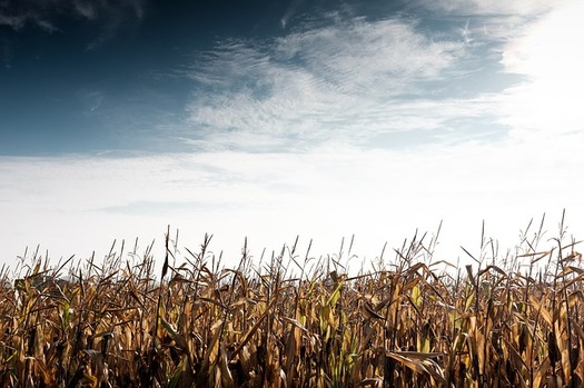 Some say rural farmers struggle to make a living under the North American Free Trade Agreement. (Pixabay)