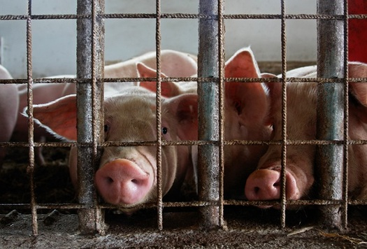 Hoosiers are speaking up about confined feeding operation rules. (hecweb.org)