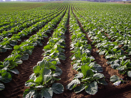 Groups that oppose the pending mergers of giant companies that sell seeds and pesticides are pressing the new U.S. Attorney General to review the three mega-deals. (belfastEileen/iStockphoto)