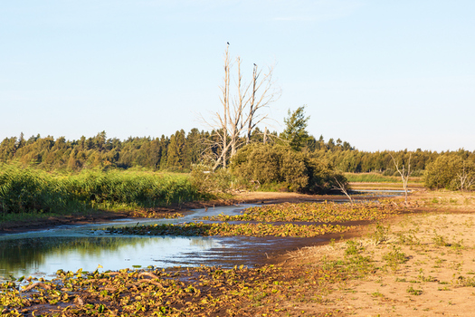 High-capacity wells are causing lakes and streams in Wisconsin to dry up. (TT/iStockPhoto.com)