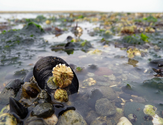 Proposed cuts to Puget Sound restoration could hurt Washington's shellfish industry. (Ingrid Taylar/Flickr)