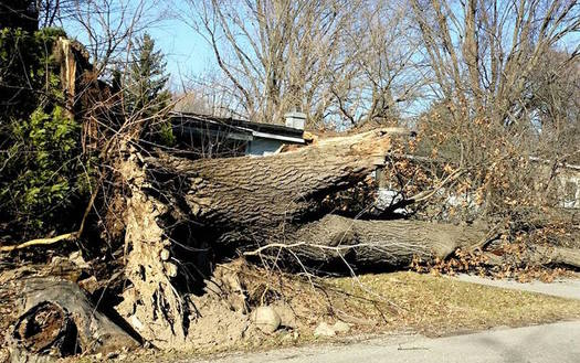 Windstorm damage done to homes, vehicles and property will typically be covered by insurance. (M. Haus)