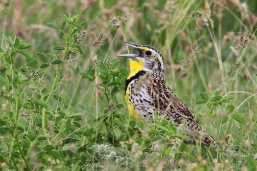 Wildlife habitat is being lost near biofuel sites in the U.S. (nwf.org)