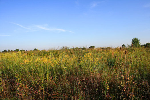 Grasslands are being lost to crops for ethanol production, particularly near ethanol plants, according to a new study. (cl_convoy/morguefile)