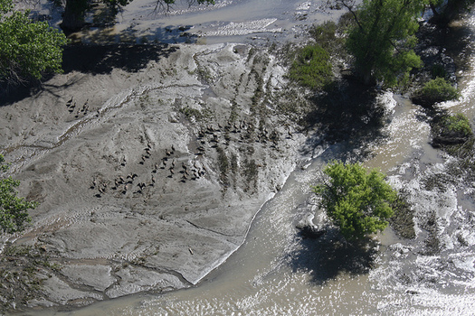 An oil spill on the Yellowstone River in 2011. Conservation groups are concerned another spill will happen if the Keystone XL pipeline is built. (David Rouse/USFWS)