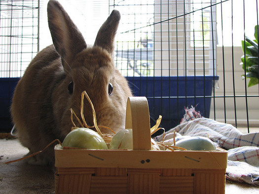 Animal rescue organizations say rabbits should not be impulse purchases. (Hans Splinter/Flickr)