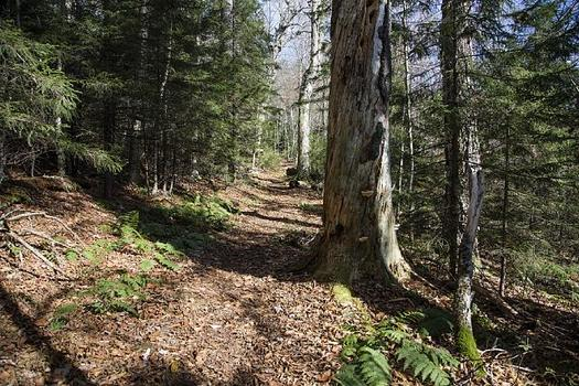 """The American Society of Foresters recognized the Gaudineer Scenic Area in 1983 for its """"near-natural condition,"""" and it's been a Scenic Area since 1964. (Carol Highsmith/Wikimedia Commons)"""