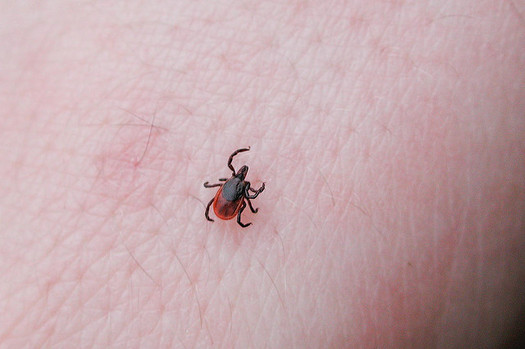 There are more ticks in North Carolina this summer because temperatures didn't drop as much during the winter months. Experts advise precautions. (s p e x/flickr)