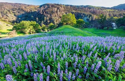 Berryessa Snow Mountain National Monument in Northern California is one of seven under federal review in the Golden State. (Bob Wick/BLM)