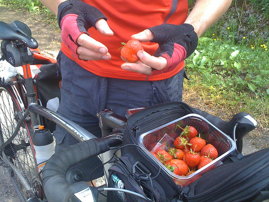 Bring healthy snacks on the road this summer to help avoid summer weight gain. (David Harris/Flickr)
