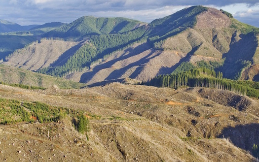 Pesticides are usually sprayed from aircraft in the clear-cutting of forests near the Siletz River. (Rio Davidson/Lincoln County Community Rights)