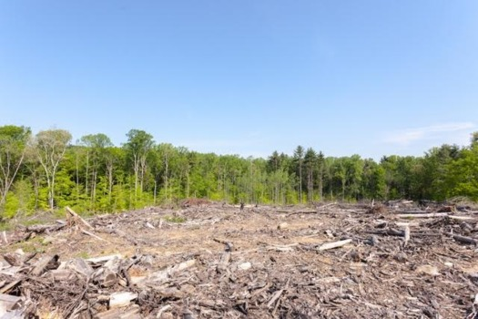 A clearcut in Pike State Forest in southwestern Indiana. (Greg Clarke)