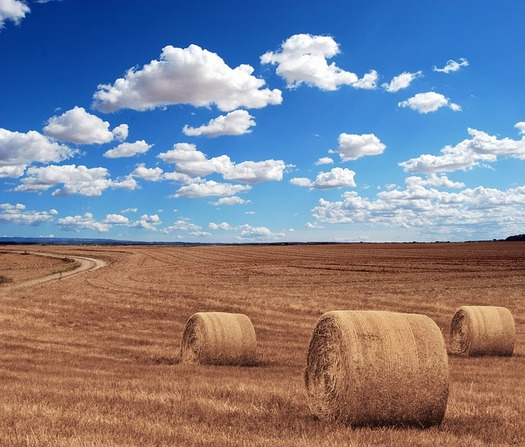 A global glut of grain is one of the key contributors to the economic downturn in farming. (Michal Jarmoluk/Pixabayy)