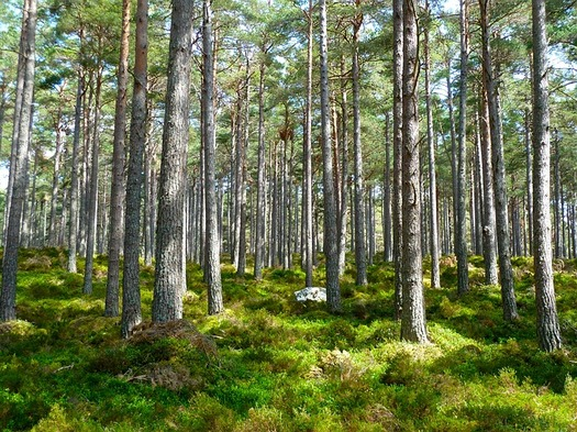 Carbon-offsetting programs benefit forests, which capture carbon and help fight climate change. (Pixabay)