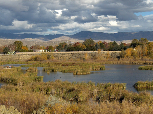 Members of a refugee stewardship program will help restore Hyatt Hidden Lakes Reserve, a wetland that flows into the Boise River. (Liz Paul/Boise River Enhancement Network)