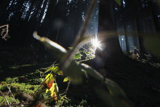 Forests, which capture carbon and help fight climate change, can benefit from carbon-offsetting programs. (Getty Images)