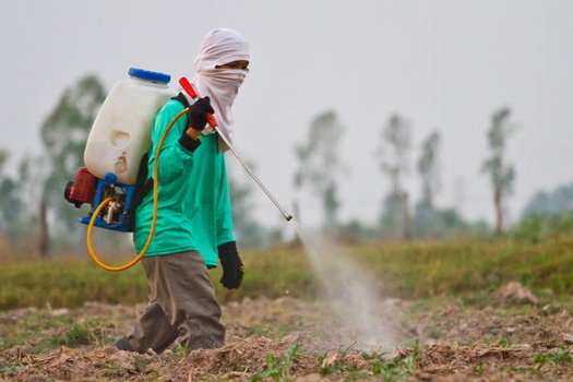 A 2011 UC Berkeley study of mothers and children in Salinas linked chlorpyrifos exposure to lower IQ scores and developmental delays. (Wasan Gredpree/iStockphoto)