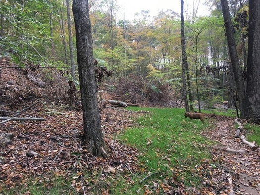 Logging has caused erosion at Yellowwood State Forest. (ifa.org)