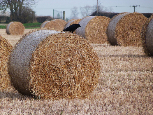 North Dakotans in the middle of severe drought can apply for a hay lottery. (Steve p2008/Flickr)