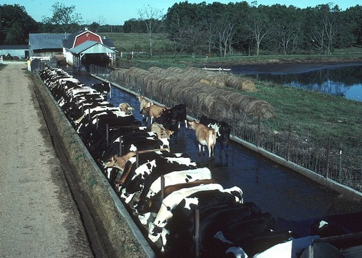 A panel is taking public testimony to determine if legislation is needed to regulate factory farms. (usda.gov)