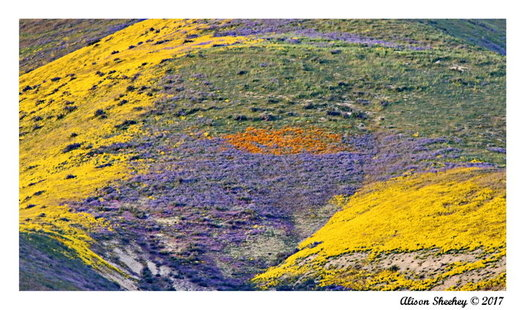 The Carrizo Plain National Monument is part of a proposed new wilderness area in Central California. (Alison Sheehey)