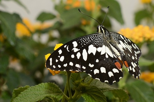Pollinators such as butterflies, certain birds and bats are an integral part of the health of natural ecosystems and agriculture. (Pixabay)