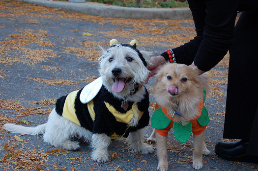 Pet costumes should be comfortable and not restrict the animal's natural movement. (Brett Neilson/Flickr)