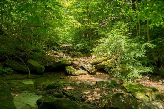668 plant and animal species have been identified in Ohio's Rock Run Watershed. (Ohio Chapter of the Sierra Club)