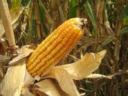 Illinois has more than 72,000 farms. (usda.gov)