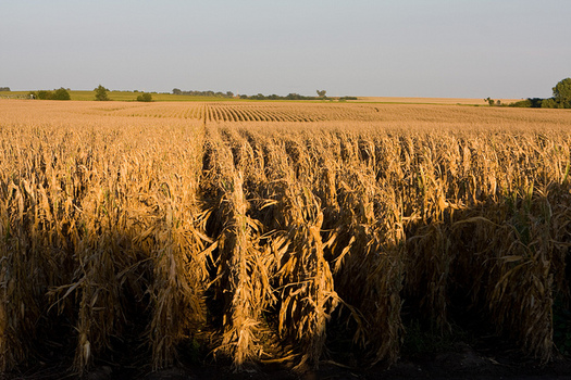In Nebraska, 500 million bushels of grain a year are needed for ethanol production. (United Soybean Board/Flickr)