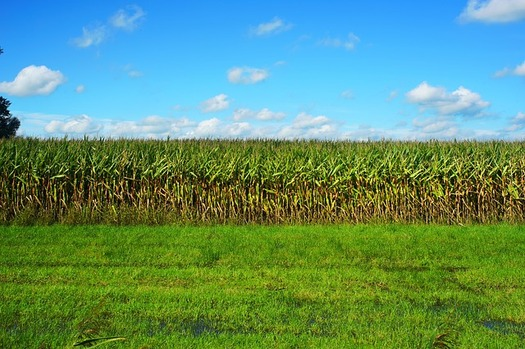 Ethanol and biodiesel production provides stable demand for Iowa corn and soybean feedstocks growers.(Kapa 65/Pixabay)